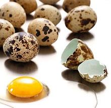quail eggs - Как правильно употреблять перепелиные яйца?